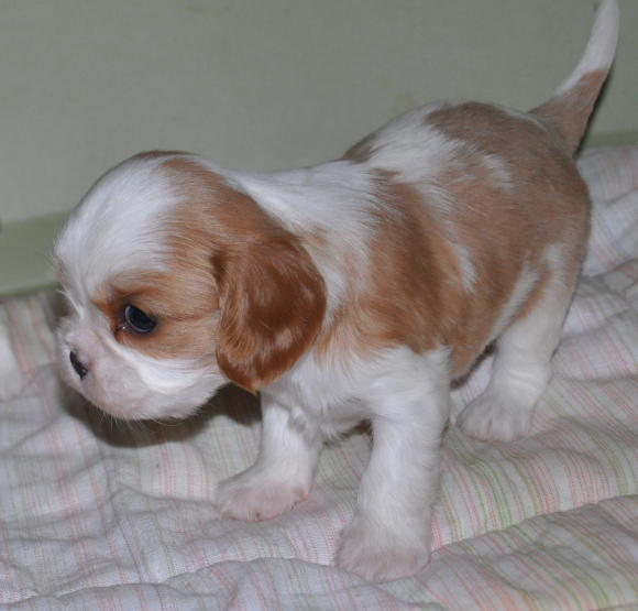Мальчик 4 недели