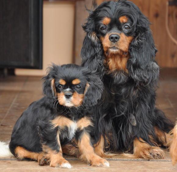 Янетта ( 2 мес) с мамой Фортуной